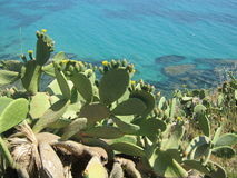 Opuntia. On the background of the wonderful blue sea of Sicily (Italy Royalty Free Stock Photography