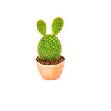Opuntia cactus in brown pot isolated on white background Stock Photos