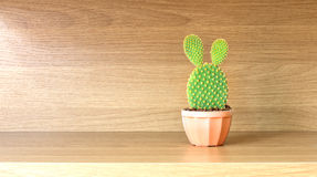 Opuntia cactus in brown pot on wooden shelf Royalty Free Stock Images