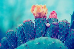 Opuntia cactus with flower. Filtered image stock photo