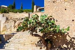 Opuntia cactus at Santa Barbara Castle in Alicante, Spain Royalty Free Stock Photos