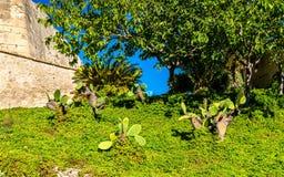 Opuntia cactus at Santa Barbara Castle in Alicante, Spain Stock Photography