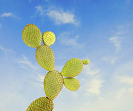 Opuntia cactus on sky Stock Image