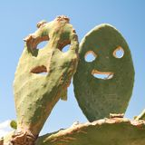 Opuntia cactus smiley Royalty Free Stock Photography