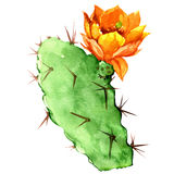 Opuntia cactus with yellow flower, watercolor Royalty Free Stock Photos