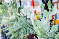 Opuntia de cactus, comme connu sous le nom de ficus-indica dans le café de rue de Taormina, Catane, Sicile photo libre de droits