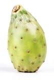 Opuntia ficus indica Stock Image