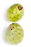 Opuntia ficus indica Stock Photography