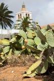 Opuntia I ficus-indica Image stock