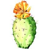 Opuntia kaktus z żółtym kwiatem, akwarela Zdjęcia Stock