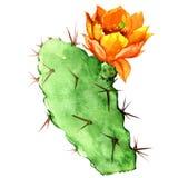 Opuntia kaktus z żółtym kwiatem, akwarela Zdjęcia Royalty Free