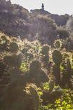 Opuntia stricta kaktusowy backlight z El Rompido latarnią morską przy b Zdjęcia Royalty Free