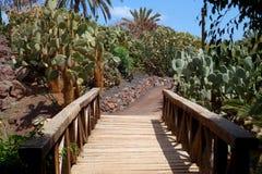 Opuntias i botanisk trädgård i den Fuerteventura ön arkivbilder