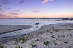 Opustoszała plaża z zwierzęciem domowym Obraz Royalty Free
