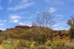 Opustoszały góra krajobraz Królewiątko jar, terytorium północne, Watarrka park narodowy, Australia obrazy stock