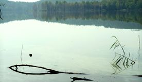Opustoszały jezioro z trawy i driftwood klejeniem z wody, spokojna scena obraz stock