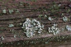 Opustoszały ogród Drzewo zakrywający z zielonym mech struktura Natura Niezwykły drzewo Barkentyna drzewo uszkadza mech Li Obraz Stock