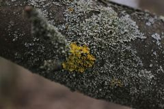 Opustoszały ogród Drzewo zakrywający z zielonym mech struktura Natura Niezwykły drzewo Barkentyna drzewo uszkadza mech Li Zdjęcia Royalty Free