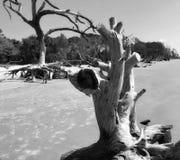 Opustoszały plażowy driftwood zdjęcie stock