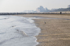 Opustoszała piaskowata plaża Obrazy Royalty Free