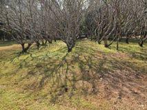 opuszczać żadnych drzewa Zdjęcia Stock