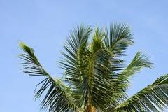 opuszczać drzewka palmowego greenfield błękitne niebo obrazy royalty free