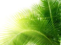 opuszczać palmy fotografia stock