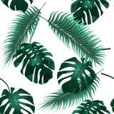 opuszczać palmy tropikalny Dżungla gąszcze tło tapeta kwiecista bezszwowa ilustracja Fotografia Royalty Free