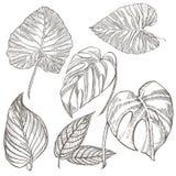opuszczać palmy tropikalny również zwrócić corel ilustracji wektora Grawerujący dżungla liście Obrazy Stock