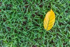 Opuszcza żółty spadać na trawie Zdjęcia Stock