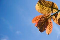 Opuszcza drzewa na niebieskim niebie Obrazy Royalty Free
