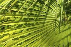 opuszczać drzewka palmowego Zdjęcia Stock