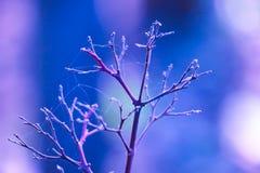 Opuszcza drzewo nie tylko zobaczy w pająk siatce zdjęcie royalty free