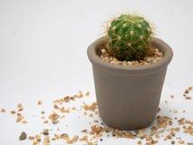 Opuszcza kaktusa samotny Zdjęcia Royalty Free