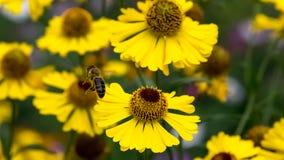 Opuszcza kawałek pollen obrazy stock