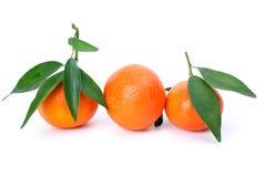 opuszczać mandarines trzy Zdjęcia Royalty Free