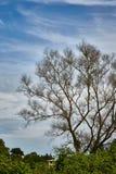 Opuszcza Mniej drzewa zdjęcie royalty free