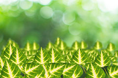 Opuszcza na zielonym tle Obrazy Royalty Free