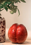 opuszcza nektarynę Obraz Royalty Free