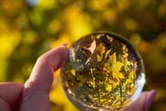 Opuszcza odbicie w kryształowej kuli w jesieni fotografia royalty free