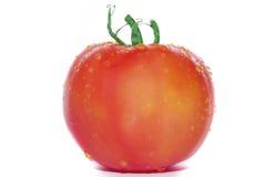 opuszcza pomidory Fotografia Stock