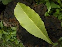 Opuszcza teksturze zielonego kolor na drewniany starym zdjęcie royalty free
