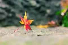 Opuszcza w jesieni Zdjęcie Royalty Free