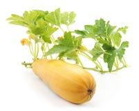 opuszczać zucchini Fotografia Royalty Free