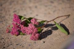 Opuszczający kwiat zdjęcia royalty free