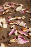 Opuszczający kwiaty zdjęcie royalty free