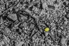 Opuszczający winogrono obraz stock