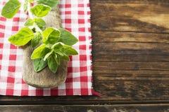 Orégano orgánico verde crudo listo para utilizar Fotografía de archivo libre de regalías