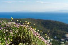 Orégano y flores salvajes en las montañas de Grecia Imagen de archivo