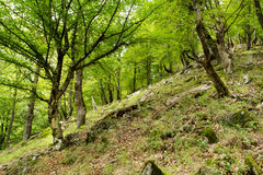 Orörd skog för berg arkivbild